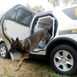 white police interceptor with dog jumping out of k-9 transportation in the back